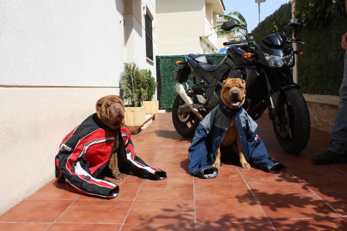 Imagen ganadora del concurso AMV para asistir al GP de Valencia